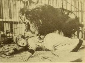 liongirl