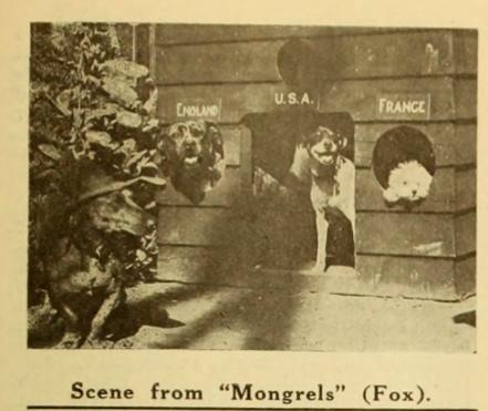 mongrels_photo